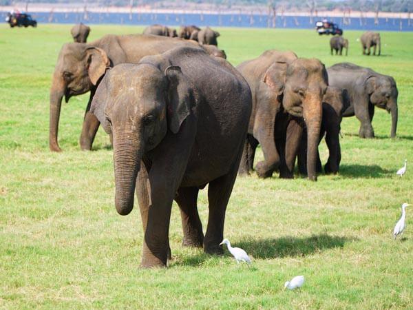 Abenteuerurlaub Sri Lanka