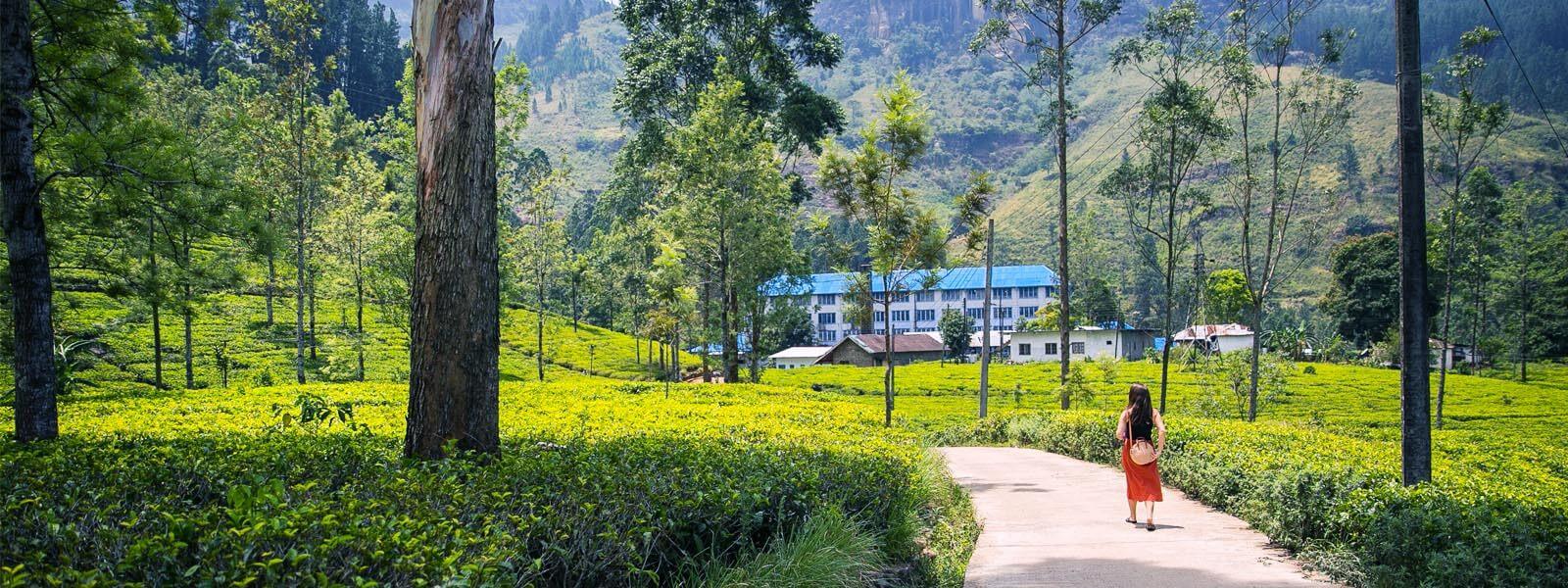 Ausflugsziele Sri Lanka