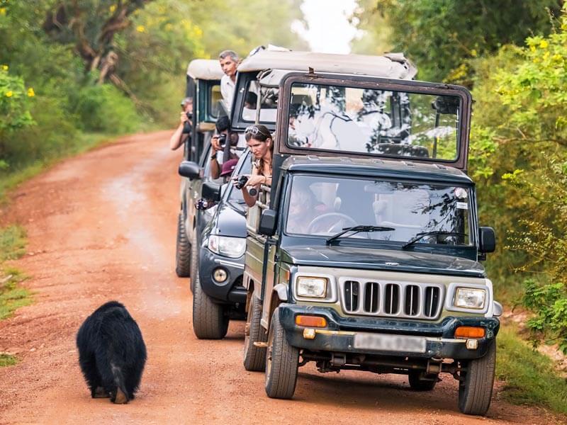 Safari Touren Sri Lanka