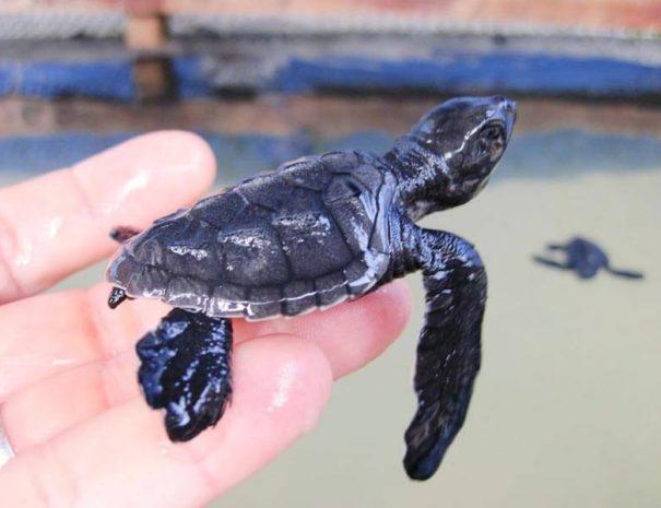 Schildkröten-Schutzprojekt