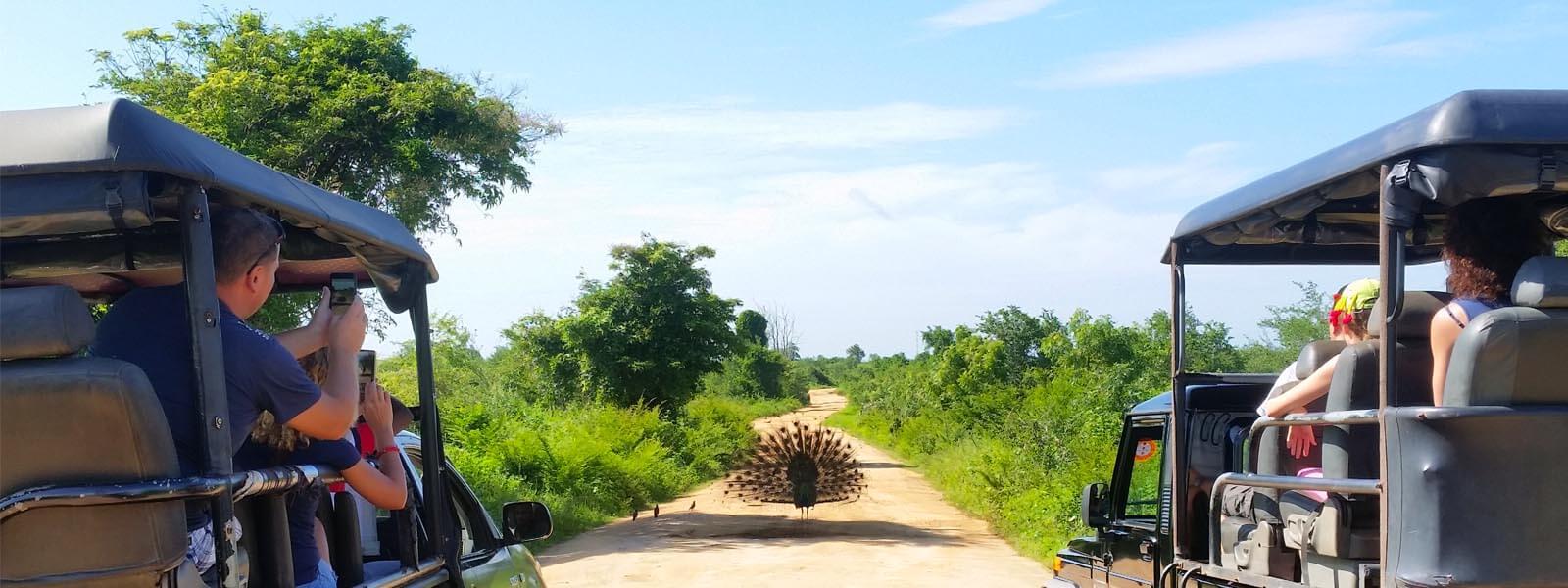 Sri Lanka Ausflüge ab Galle