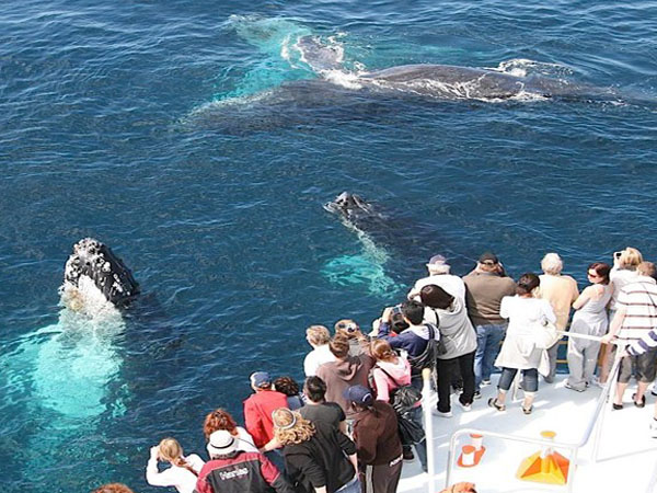 Tagesausflug Walbeobachtung nach Mirissa 2