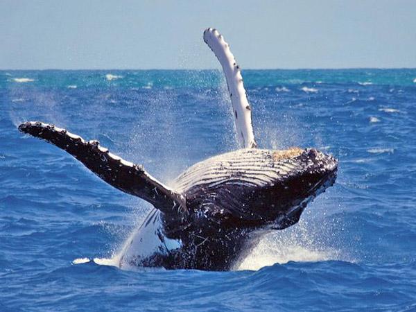 Tagesausflug Walbeobachtung nach Mirissa