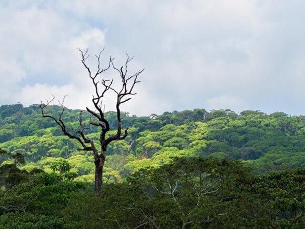 Tagesausflug nach Sinharaja Regenwald