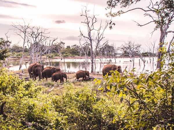 Tagesausflug zum Yala-Nationalpark 2