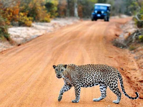 Tagesausflug zum Yala-Nationalpark