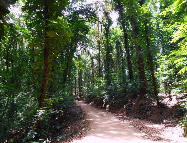 Waldschutzgebiet Udawatta Kele